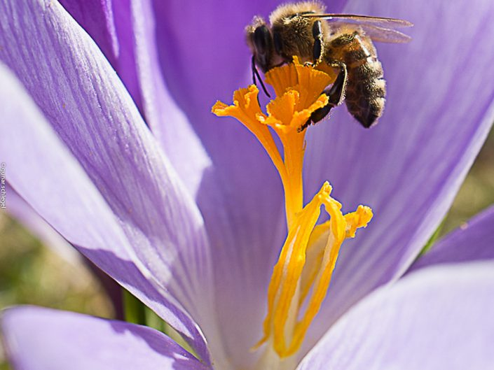 Bienenfrühling